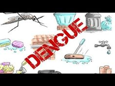 Dengue- All you need to know