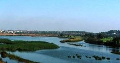 Grupo de cidadãos vai remover chorão na Lagoa dos Salgados! | Algarlife