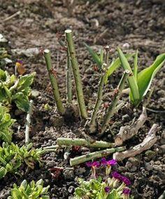 Die 39 Besten Bilder Von Blumen Garten Balkongarten Und Blumen