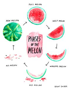 Phases of the melon from Incidental Comics. Alas, I am in the no melon phase. Fortunately, that is easily remedied. Food Illustrations, Illustration Art, Artsy Fartsy, Food Art, Watercolor Art, Watercolour Paintings, Doodles, Comic, Drawings