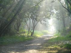 Another one in the series on morning at Taljai Hill in Pune