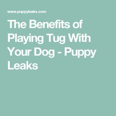 The Benefits of Playing Tug With Your Dog - Puppy Leaks
