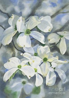 White Dogwood Painting by Sharon Freeman - White Dogwood Fine Art Prints and Posters for Sale