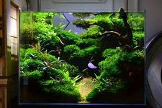 Flawless 50 Aquascape Aquarium Design Ideas https://meowlogy.com/2017/04/04/50-aquascape-aquarium-design-ideas/ In this Article You will find many Aquascape Aquarium Design Inspiration and Ideas. Hopefully these will give you some good ideas also.