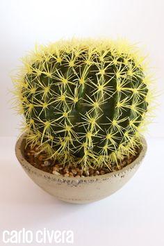 Echinocactus in vaso di pietra. http://carlocivera.org/  #echinocactus #composizione #piantagrassa #arredamento