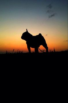 French Bulldog, silhouette at sunset.