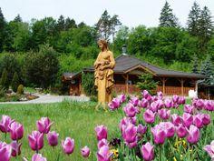 Hotel Kaskady and its surroundings   #luxury #holiday #hotel #kaskady #surroundings  #flowers #statue