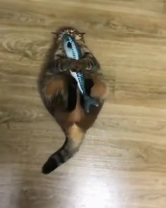 Fish Toy For Cats Yours cat 🐱 go crazy when see this fish! Cute Funny Animals, Funny Animal Pictures, Cute Baby Animals, Animals And Pets, Cute Cats, Funny Cats, I Love Cats, Crazy Cats, Gato Gif