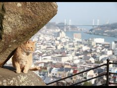 Hiroshima Cat Street View: A Cat's-eye View of Onomichi--Hiroshima is more than just the Atomic Bomb Museum and the Itsukushima (popularly known as Miyajima) Shrine.--  http://goinjapanesque.com/