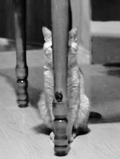 when a cat plays hide and seekLOL. Reminds me of Dinky. He loved playing with the jar ring suspended from the metal leg of the dining table. Ala volleyball. LOL Smack! Clang! Ring! Smack!! DJ also played with the ring...rolled around and grabbed it with his mouth and batted it!