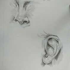 Pencil shading of ear and nose
