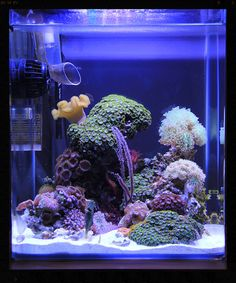 Nano-reef Saltwater Tank, Saltwater Aquarium, Aquarium Fish, Nano Reef Tank, Reef Tanks, Coral Reef Aquarium, Marine Aquarium, Cool Fish Tanks, Aquarium Landscape