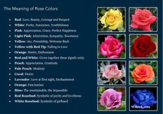 Very often, red roses were used to The meaning of flowers; listings of several flower types and colours with their ROSE White and Red Together - Unity White.