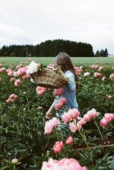 picking peonies