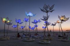 Burning Man: Photos From the Playa : Discovery News