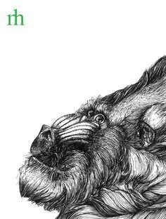 Manuela Hoffmann, @pixelgraphix: Mandrill ... Moleskine Sketchbook, Pigma Micron, Sommer 2014