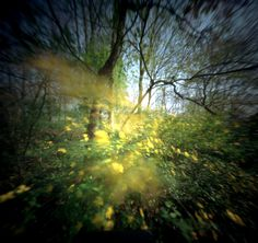 Bethany de Forest Pinhole pictures - Flowers