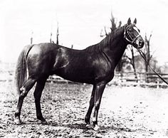 Fair Play, sire of Man o' War