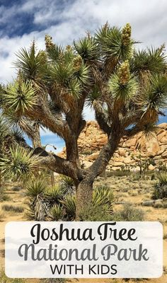 Joshua Tree National Park in Southern California is an amazing travel destination for the whole family. Get recommendations for things to do, hiking information, and planning tips for a visit to Joshua Tree with kids.