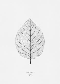 Drawing of a leaf skeleton by inkylines. The posters are signed and numbered (edition of High-quality print created from an original and hand drawn illustration. Skeleton Drawings, Ink Pen Drawings, Botanical Illustration, Illustration Art, Leaf Skeleton, Nature Drawing, Leaf Drawing, Macro Flower, Object Drawing