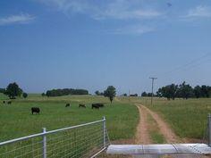 Pasture entrance/cattle guard
