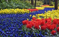 Keukenhof Gardens, Lisse, Holland, the Nederlands Pictures Of Spring Flowers, Spring Flowers Wallpaper, Spring Desktop Wallpaper, Flower Wallpaper, Flower Photos, Desktop Backgrounds, Petunias, Ideas Para Decorar Jardines, Flowers Background
