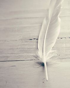 The feather is a symbol of 2014!