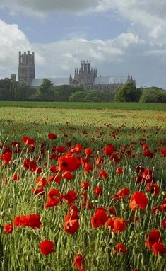 Red poppies in the foreground. Ely Cathedral, Cambridgeshire, England in the distance. | Grantchester, as seen on Masterpiece PBS