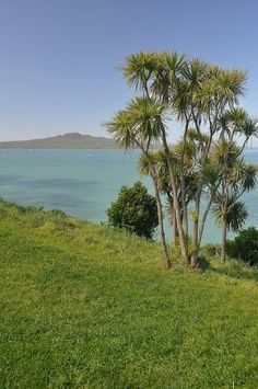 Rangitoto Island, extinct volcano in Auckland Harbour, Auckland, The North Island, New Zealand Beautiful Islands, Beautiful World, Beautiful Places, New Zealand Holidays, New Zealand Landscape, Auckland New Zealand, Kiwiana, Banff National Park, South Island
