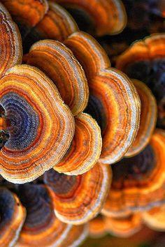 Texture and Pattern: Turkey Tail Fungi Natural Forms, Natural Wonders, Natural Texture, Patterns In Nature, Textures Patterns, Nature Pattern, Organic Patterns, Fotografia Macro, Mushroom Fungi