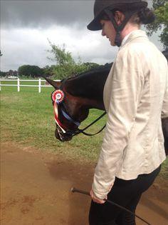 Devondale abedan - Horse of the year 2027 SA a Boerperd In-hand gelding Reserve Riding Helmets, Horses, Horse
