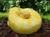Francesca Pitcher from North Star Cakes created an incredibly realistic snake cake that look like a Burmese python. She created this python cake for her Unconventional Wedding Cake, Gross Halloween Foods, Halloween Meals, Halloween Sweets, Haunted Halloween, Halloween Table, Halloween Birthday, Halloween Stuff, Easy Halloween