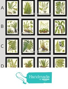 Botanical Set of 16 Prints Unframed Antique Beautiful Ferns Green Forest Nature Home Room Fern Decor Wall Art from LoveThePrint https://www.amazon.com/dp/B018RCC5P0/ref=hnd_sw_r_pi_dp_1YR8xbV382C21 #handmadeatamazon