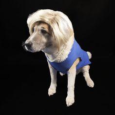 Howl-lary Clinton Diy Dog Costumes, Dog Halloween Costumes, Halloween Countdown, Cute Dog Pictures, Cute Creatures, Four Legged, Fur Babies, Cute Dogs, Lion Sculpture