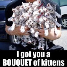 Bouquet of kittens-- the purr-fect gift!!