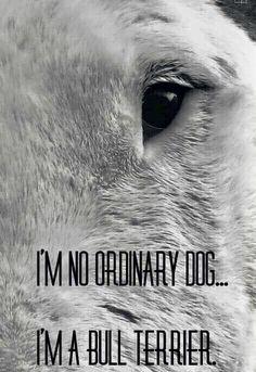 I'm No Ordinary Dog... I'm A Bull Terrier...
