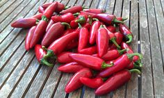 Jalapeño Agriset 4108  The plant produces high yields of 9x2.5cm (3.5 x 1inch) wide peppers.  The fruits have thick walls and turn from glossy very dark green to red when mature.  Excellent for making salsa and pickling. One of the best Jalapeno varieties on the market, excellent flavor!
