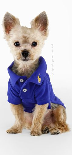 Ralph Lauren Classic Polo  I'm sure Kream would like this in pink or green. :)
