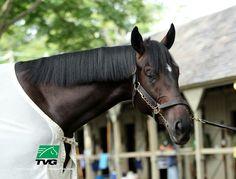 Zenyatta's son, Cozmic One, begins his racing career Friday, 4/17/15 at Santa Anita!