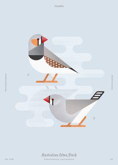 Australian Zebra Finch (dsc) Art Print by Aga Więckowska | Society6