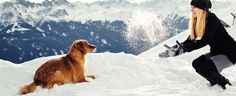 Urlaub mit Hund - Hundefreundliche Ferienwohungen, Ferienhäuser, Hotels und Campingplätze