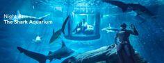 Paris. Frühlingsluft. Eine Flasche französischer Rotwein. Und ein herrlicher Blick vom Eiffelboooooooooooring. Bei Airbnb kann man Paris auf ganz besondere Art erleben, denn es gibt zwei Nächte im Aquarium gewinnen, genauer: Im Hai-Aquarium. Grundvoraussetzungen für den Aufenthalt ist, man sollte gesund und fit sein, nicht mehr als 190kg wiegen und beim Anblick von Haien nicht [ ]