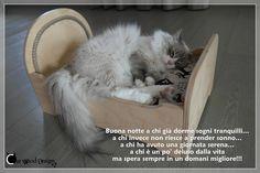 Buona #notte a tutti gli a #mici di #CatWoodDesign da Ferdinand! #gatti