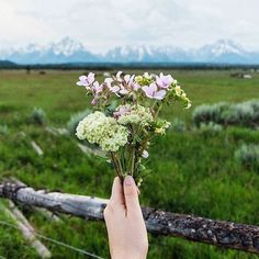 Fresh air and flowers