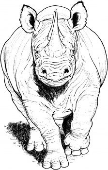Black Rhino Running coloring page | Super Coloring