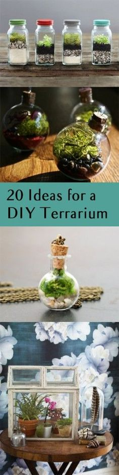 DIY terrarium, terrarium ideas, gardening, gardening hacks, popular pin, DIY gardening, gardening tips and tricks.