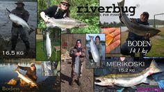 RiverBug catch photos from summer 2017. #riverbug #rivertube @RiverBugFinland www.riverbug.fi