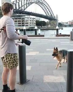 German Shepherd Videos, Female German Shepherd, German Shepherds, Balmain, Fur Babies, Photo Shoot, Puppies, Queen, Funny