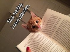 Stop reading. I need attention.