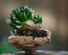 35 Ideas Cactus Succulent Art For 2019 Succulent Bowls, Succulent Bonsai, Succulent Bouquet, Tall Succulents, Colorful Succulents, Succulents Garden, Succulent Wedding Centerpieces, Succulent Arrangements, Vertical Garden Diy